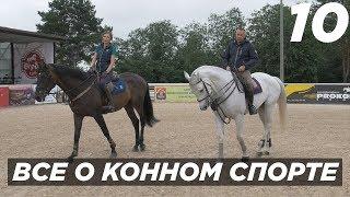 Все о конном спорте