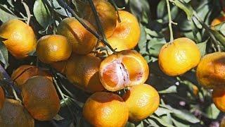 Texas Superstar Plants 2015 | Brent Pemberton |Central Texas Gardener
