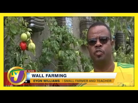Wall Farming in Jamaica | Small Farming Ideas | TVJ News