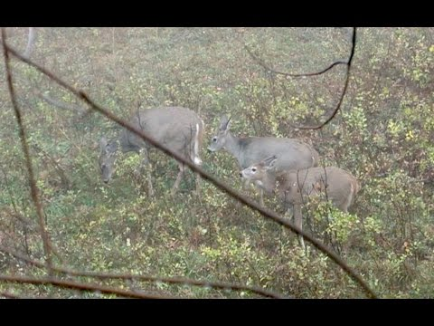 ARCHERY HUNTING WHITETAIL DEER In NORTH DAKOTA