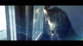 Video Kucing galau masa kini download MP3, 3GP, MP4, WEBM, AVI, FLV Desember 2017