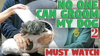 No One Can Groom My Dog 2
