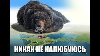 Кто воевал против СССР в 1941 году  Документальный