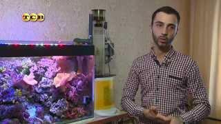 Морской аквариум дома(Морской аквариум – это кристально прозрачная вода холодного голубоватого оттенка, яркие рыбки причудливо..., 2015-11-03T10:04:25.000Z)