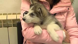 сюжет об Общественном Фонде «Якутский городской Фонд помощи животным»