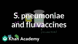 Streptococcus pneumoniae and flu vaccines | Respiratory system diseases | NCLEX-RN | Khan Academy