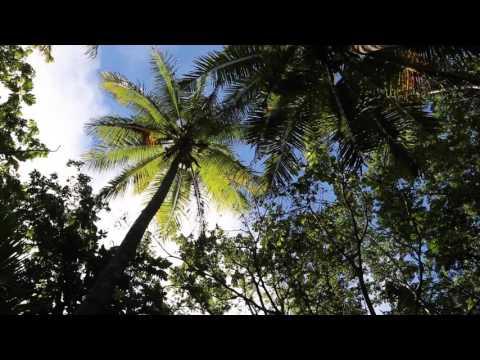 Niue Fort / Niue Fort