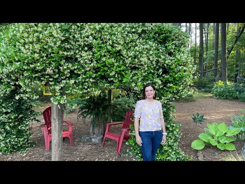Mimi's Late Spring Garden Tour | Gardening with Creekside