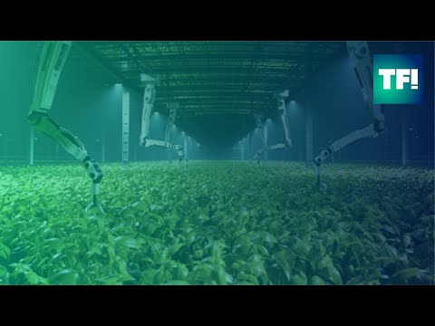 Singapore's sustainable rooftop farms prove we can produce food anywhere