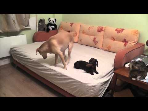 Ever wonder what dogs do while waiting for you?