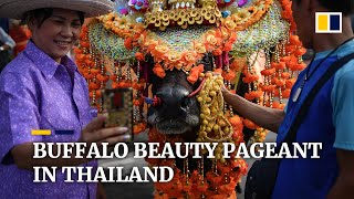 Thailand's annual buffalo beauty pageant