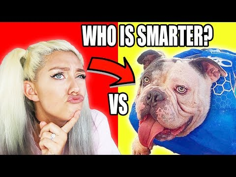 Is Your Dog Smarter Than You?