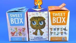 SweetBox Котята Пушистики Сюрприз Игрушки Свит бокс