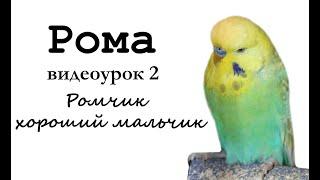 """Учим попугая по имени Рома говорить. Видеоурок 1: """"Ромчик хороший мальчик!"""""""