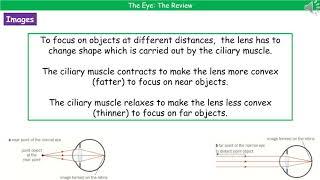 B3.1.3 - The Eye Summary