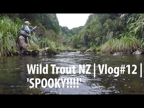 Wild Trout NZ | Vlog #12 | How to Spook Trout! 4K UHD