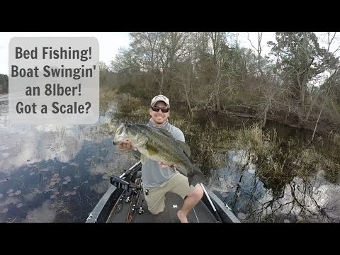 Bed fishing for big bass boat swinging an 8lber got a for Bed fishing for bass