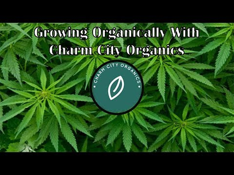 Growing organically with @charmcityorganics DC Cannabis grower and consultant.