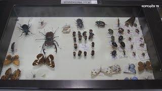 """Удивительный мир энтомологии: более 700 видов насекомых собрали в усадьбе """"Костино"""""""