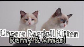 Unser tierischer Nachwuchs! Herzlich Willkommen Remy & Amari! Unsere Katzen ziehen ein