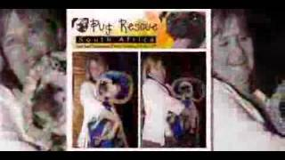 Pug Rescue South Africa - Year End Fundraiser-show0.flv