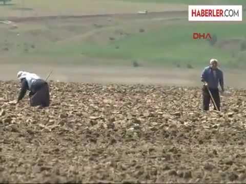 Kuraklıktan Suların Çekildiği Keban Baraj Gölü'nde 40 Yıl Sonra Çiftçiliğe Başladılar