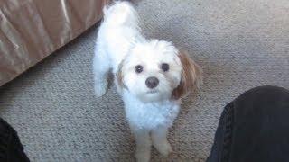 My Best Buddy (Vlog #183)