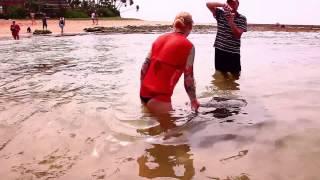 Шри-Ланка, черепахи