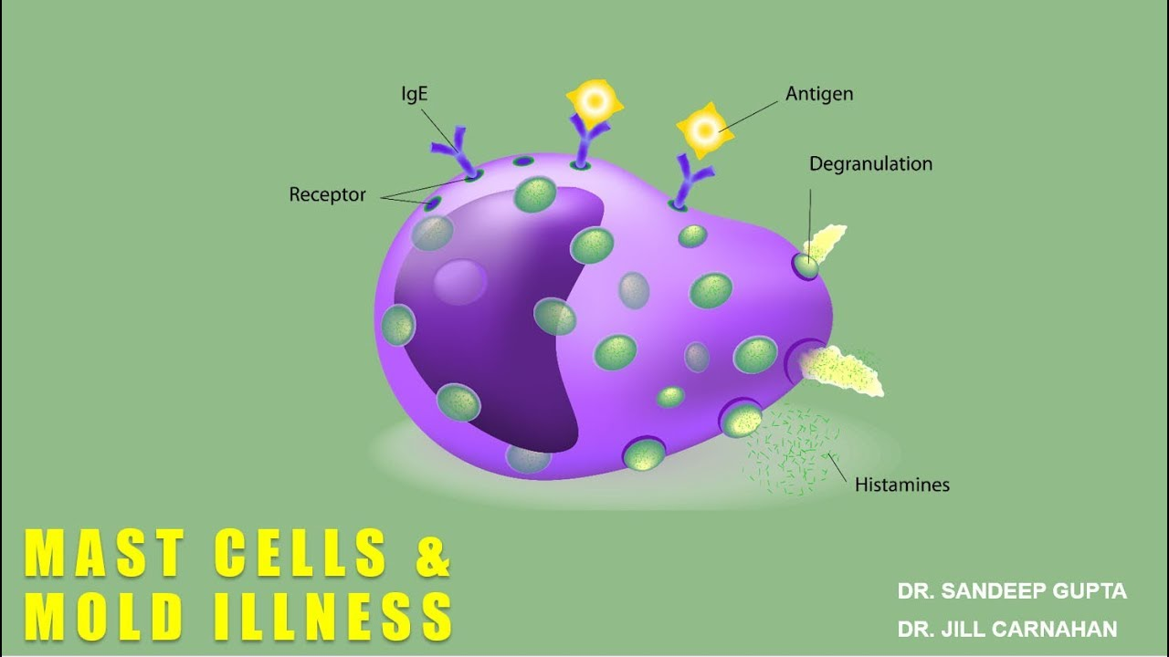 Mast Cells and Mold Illness with Dr  Jill Carnahan - Mold