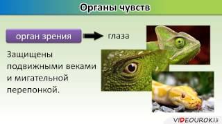Урок по биологии