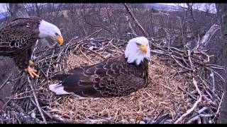 Hanover, PA Eagles - Dad arrives for his first look at the baby - 03-24-15