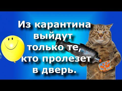 КАРАНТИН С ЮМОРОМ! Веселая самоизоляция! Видео открытка для друзей