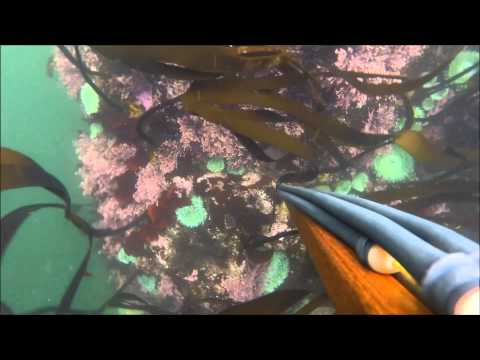 Haystack Rock, Pacific City Spearfishing Oregon 8/10/2015