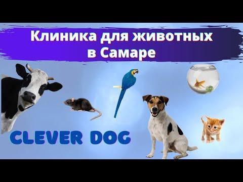 Клиника для животных в Самаре. Ветеринарный центр Clever Dog