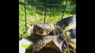 Лучшие видео приколы с черепахами