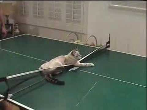 Thumbnail for Cat Video Kitty Cat Pong