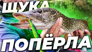 Похолодало и ПОПЁРЛО ЩУКА ГНЁТ спиннинги в ДУГУ Рыбалка на щуку