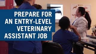 Earn your Certificate in Veterinary Assistant from Charter College