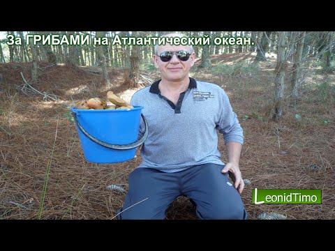рыбалка на волнушке видео