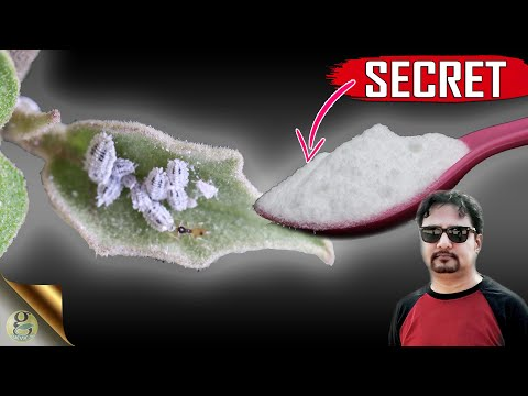 SECRET BAKING SODA HACK || The Most Powerful Organic Pesticide Mixture