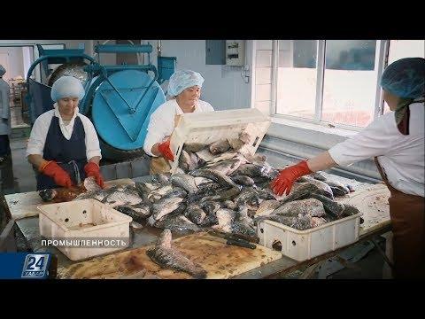 Казахстанская рыба пошла на экспорт | Промышленность