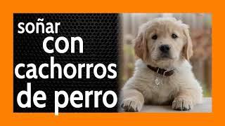 Soñar con Cachorros de Perros 🐶 ***Lindo*** significado  + CHISTE 🤣