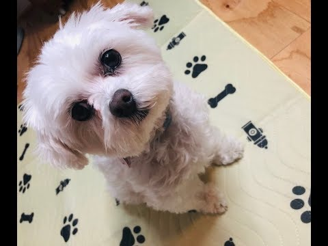 Washable Pee Pads For Dogs: Extra Large Review