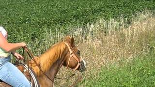 Stabilized Pony Ride