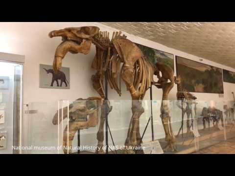 Dinosaur skeleton ancient animal bones National museum of Natural History of NAS of Ukraine