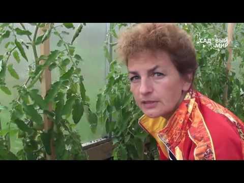 Как обрывать пасынки у помидор видео