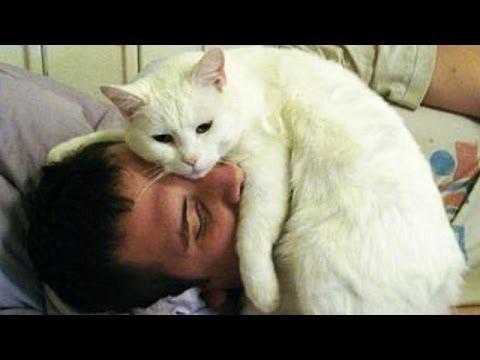 Cat Alarm Clocks Compilation - [2015]