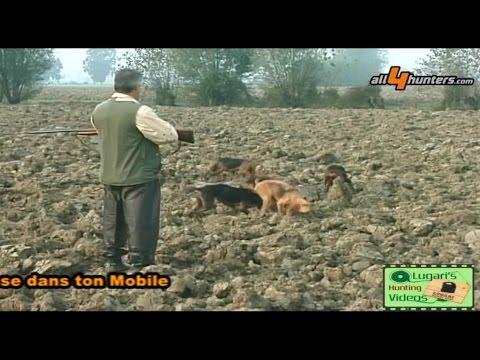 Caccia alla lepre con i segugi, Lugari Video