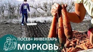 Посадка моркови весной по технологии Гордеевых