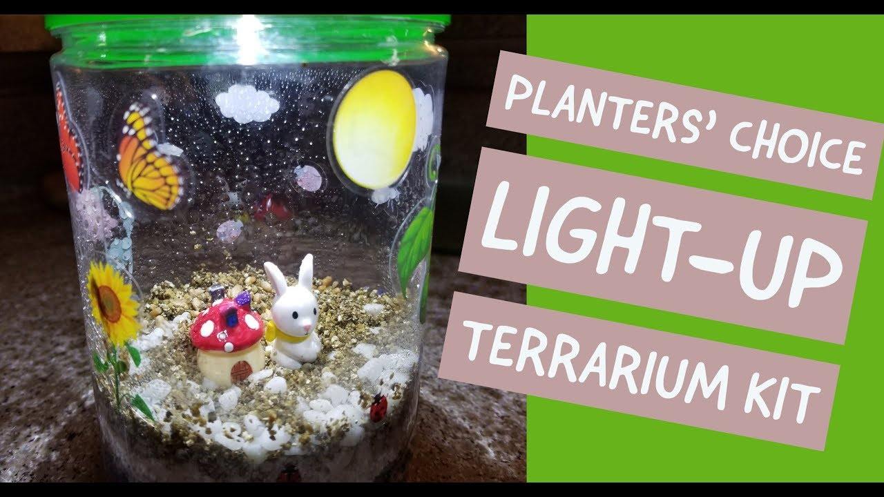 Planters Choice Light Up Terrarium Kit For Kids Youtube